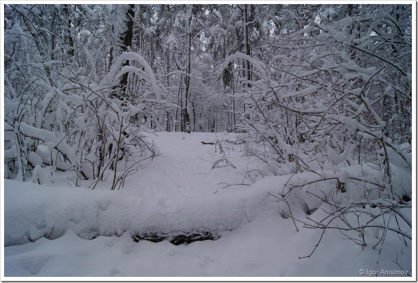 Зимнее утро в голосеевском лесу